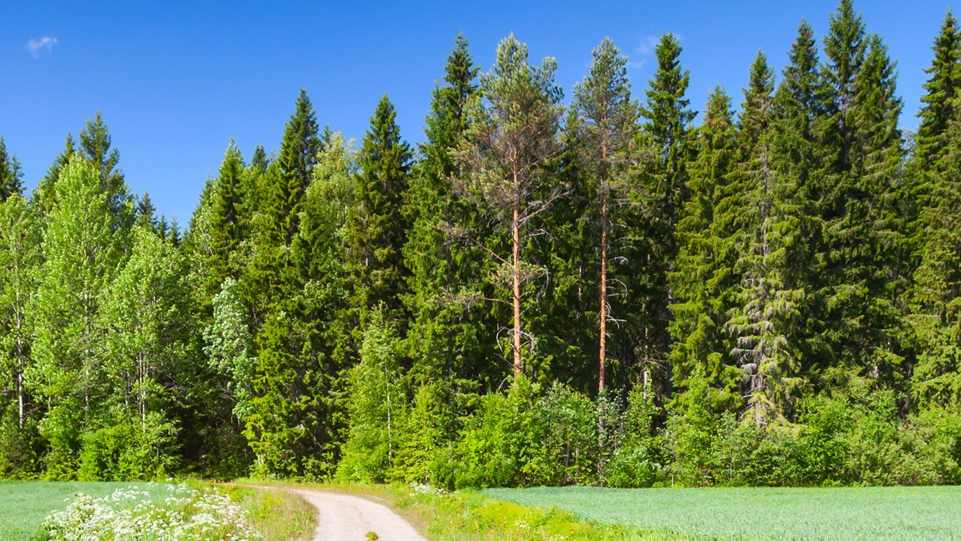 Suomalaisen puun mahdollisuudet