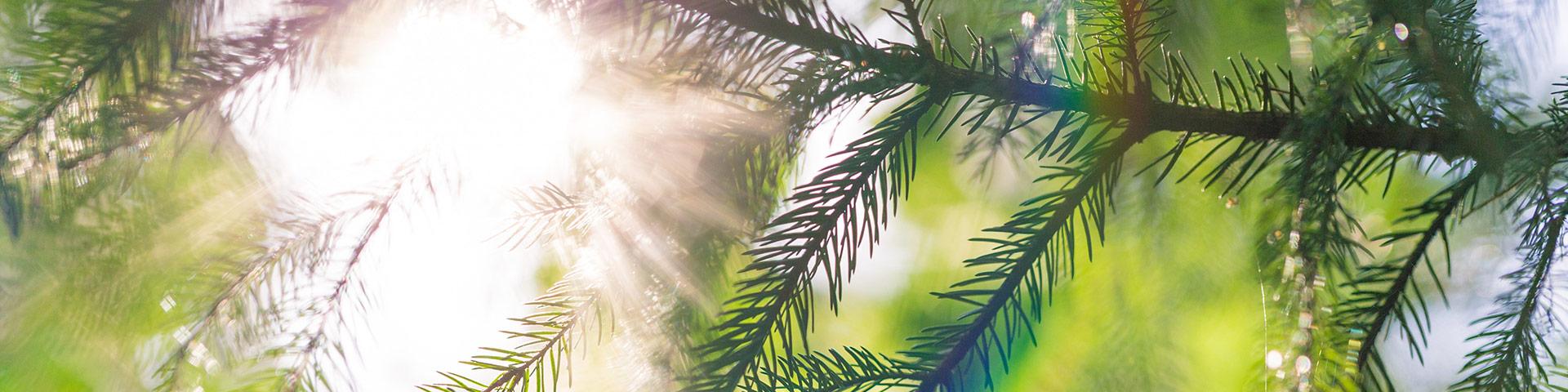 Uusi Puu hanke - Kertoo mihin puu pystyy